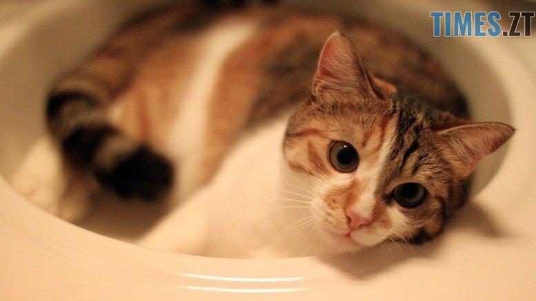 cat 2330131 1280 - Запасайтесь водою: де у Житомирі завтра не буде води