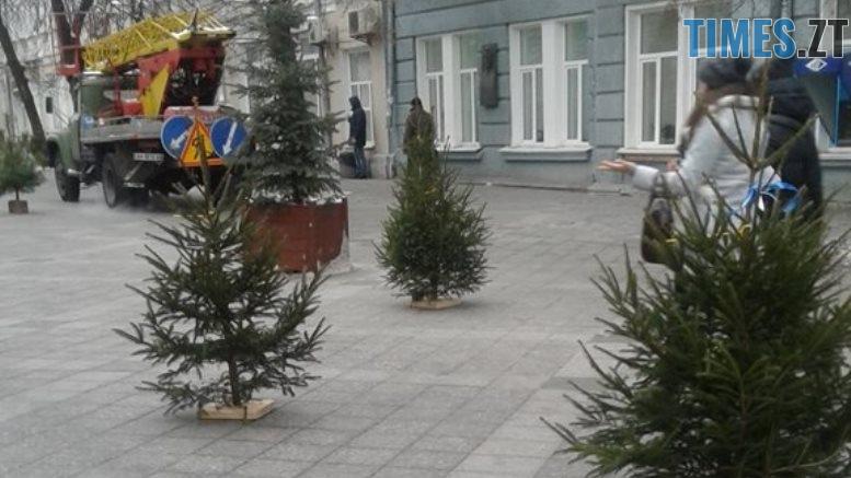 ялинки - Через «мертві» ялинки на Михайлівській житомиряни погрожують влаштувати акцію протесту