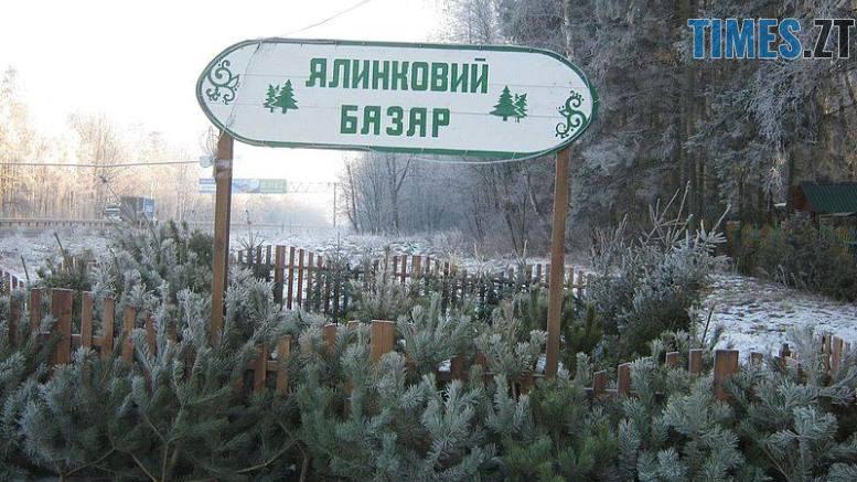 базар - Продати півмільйона хвойних дерев: де та за скільки можна купити ялинку на Житомирщині