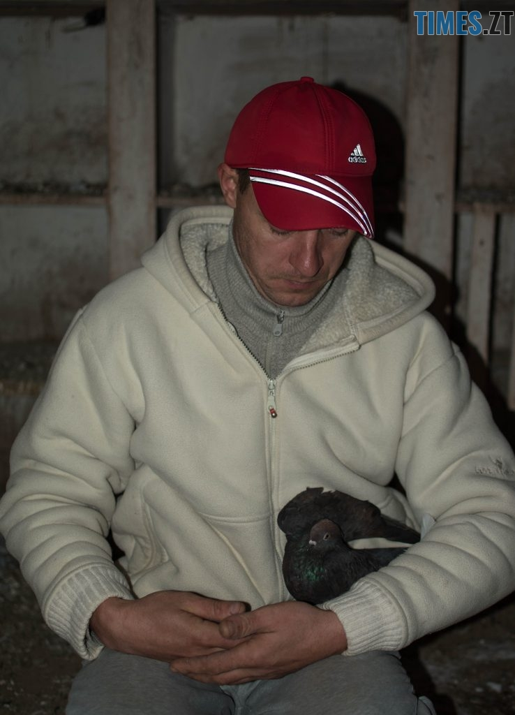 DSC 0230 738x1024 - Як розводять голубів: поради для початківців