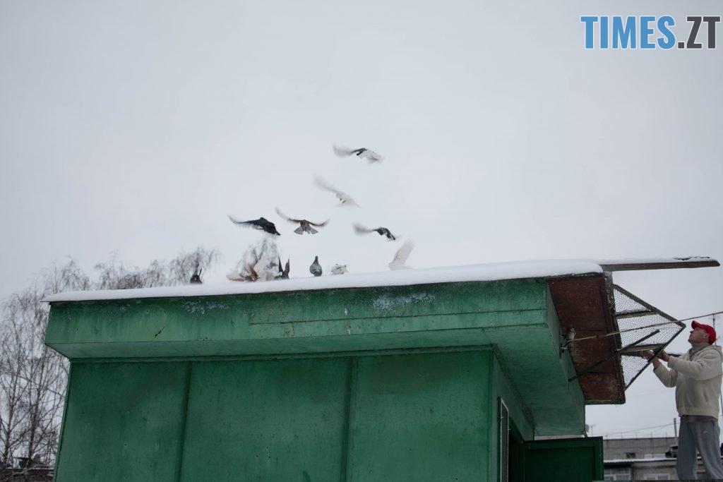 DSC 0245 1024x683 - Як розводять голубів: поради для початківців