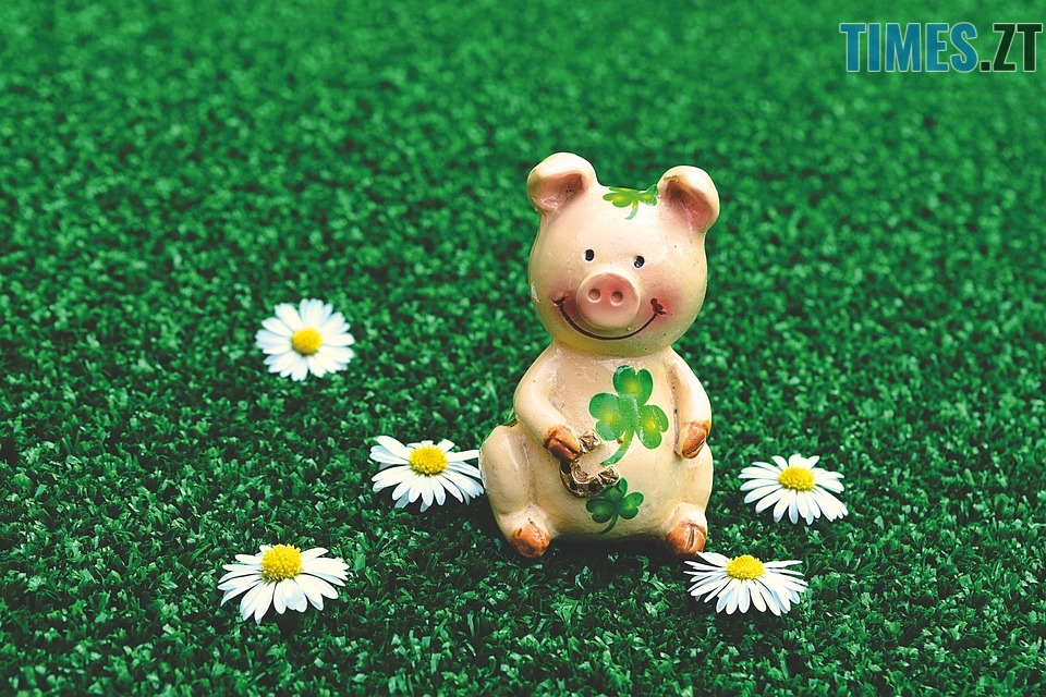 lucky pig 3838173 960 720 - Що принесе житомирянам рік Свині