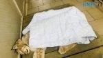 50853137 2945213985504328 6416444801058603008 n 150x84 - У житомирському Гідропарку знайшли поранену рись, занесену до Червоної книги