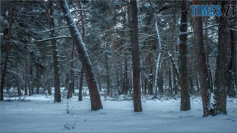 52599019 1867850929989928 6479951261239083008 n - Десять годин у полоні зимового лісу провів пенсіонер з Олевщини