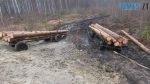 lis Nov 4 150x84 - На Житомирщині «на гарячому» впіймали групу «чорних» лісорубів