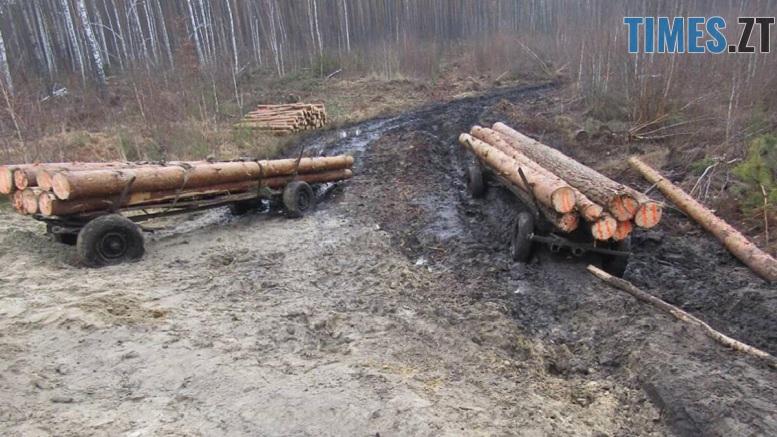 lis Nov 4 - На Житомирщині «на гарячому» впіймали групу «чорних» лісорубів
