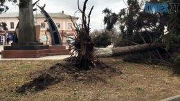 derevo 260x146 - Бердичів планує ліквідацію наслідків буревію (ВІДЕО)
