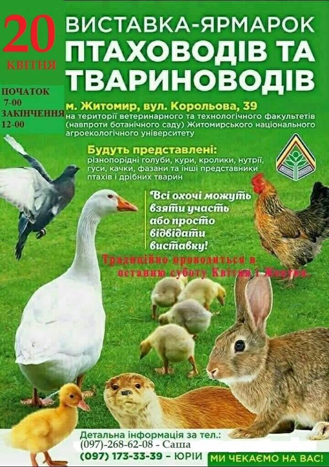 56681330 2344107225634561 9201361819816427520 n - Житомирян запрошують на виставку-ярмарок тварин