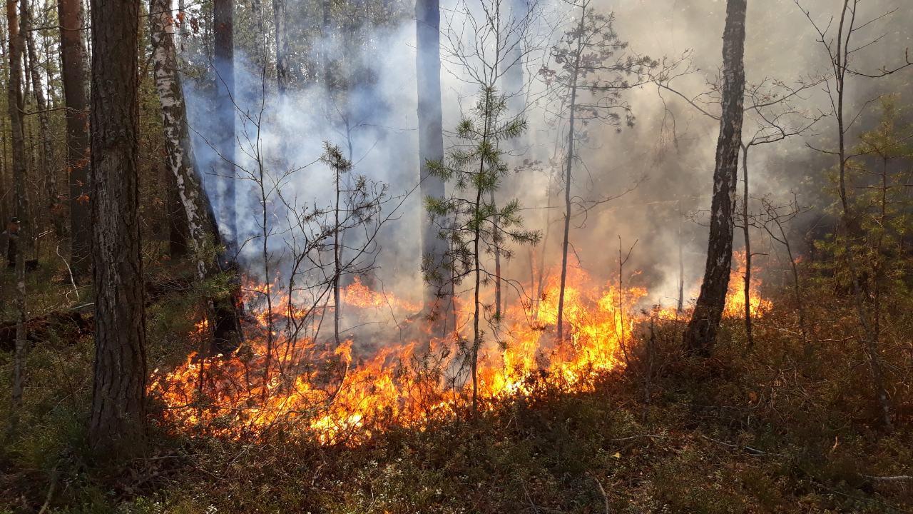 IMG 080d83f - На Житомирщині триває боротьба з лісовими пожежами. Залучено авіацію