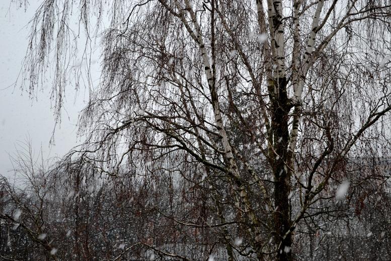 DSC 0038 - Вчора злива – а завтра сніг? Житомир очманів від аномальної весни (відео, фото)