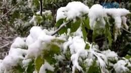 Snih 2 260x146 - Вчора злива – а завтра сніг? Житомир очманів від аномальної весни (відео, фото)