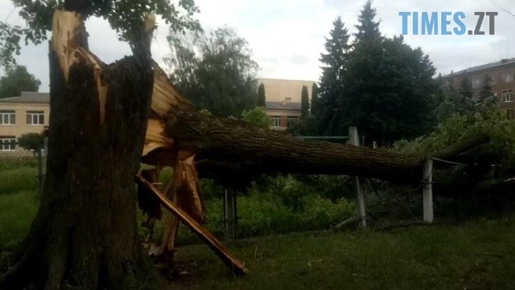 61851517 2167198780169213 1101804139584684032 n - В Житомирі ураган зривав дахи з будівель та валив дерева (ФОТО)