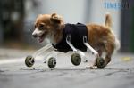 Screenshot 109 150x99 - У Житомирі відбудеться фотовиставка про тварин-інвалідів