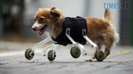 Screenshot 109 260x146 - У Житомирі відбудеться фотовиставка про тварин-інвалідів
