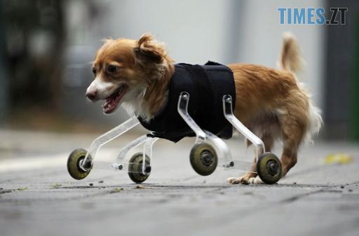 Screenshot 109 - У Житомирі відбудеться фотовиставка про тварин-інвалідів
