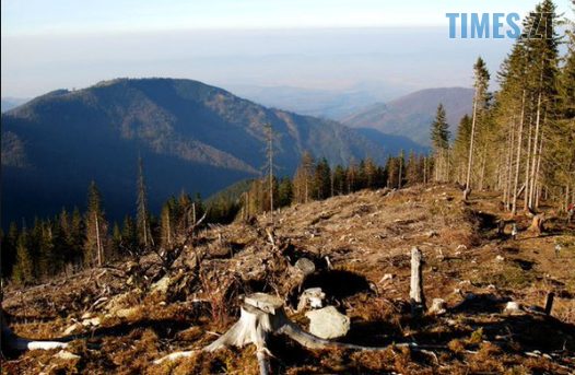Screenshot 36 - Повна заборона вирубки лісу: житомирян закликають підтримати петицію