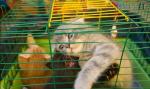 Screenshot 53 1 150x89 - Житомирян закликають підтримати петицію щодо заборони продажу тварин у зоомагазинах