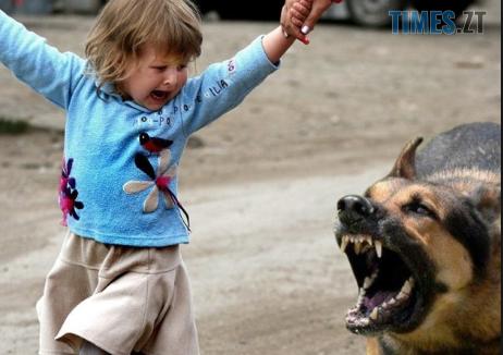 Screenshot 32 1 - У Бердичеві безпритульна собака пошматувала дитину