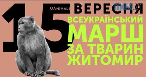Screenshot 1 3 - У Житомирі відбудеться Всеукраїнський марш на честь захисту тварин від жорстокості