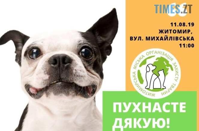 Screenshot 21 1 664x437 - Житомирян запрошують долучитися до благодійної акції до Дня ветеринара