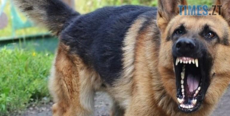 2  large big - Будьте обережні! У Бердичівському районі собаки, хворі на сказ, нападають на людей