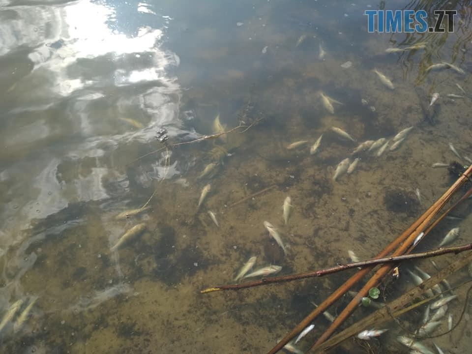 70404451 383216759033195 7042743039604817920 n - Рибоохоронний патруль б'є на сполох: під Житомиром масово гине риба