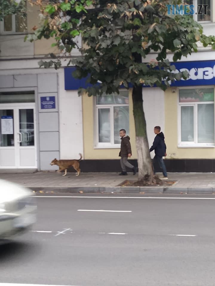 70869183 2576877399044101 5183047433369681920 n - У мережі оприлюднили світлини, як житомирські діти знущаються над безпритульною собакою (ФОТО)