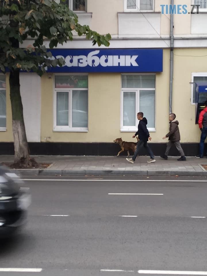 70904956 2576877602377414 6660569642651615232 n - У мережі оприлюднили світлини, як житомирські діти знущаються над безпритульною собакою (ФОТО)