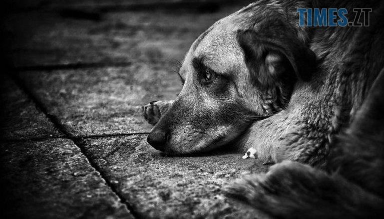 7878788787878 767x437 - У мережі оприлюднили світлини, як житомирські діти знущаються над безпритульною собакою (ФОТО)