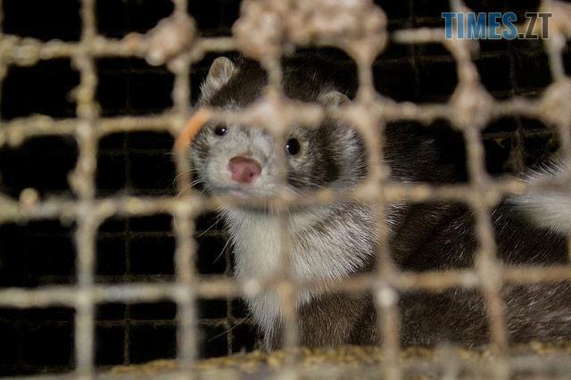 1570552259 3126 - Захисники тварин через суд вимагають закриття хутрової ферми у Сінгурах