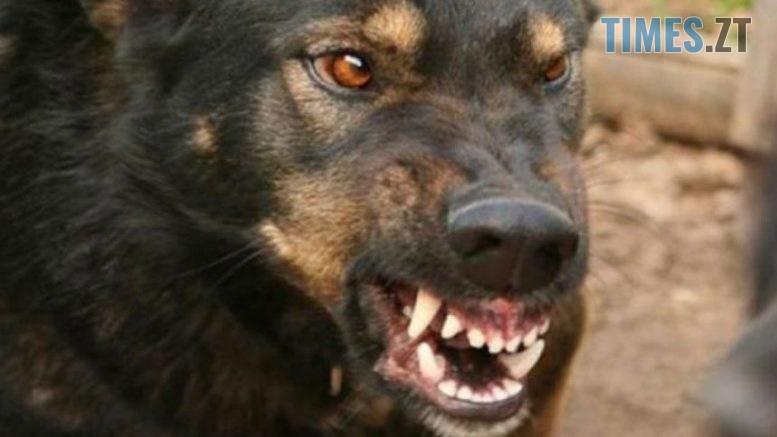 19 777x437 - Мешканця Житомирщини ледь не розірвала зграя безпритульних собак, - соцмережі