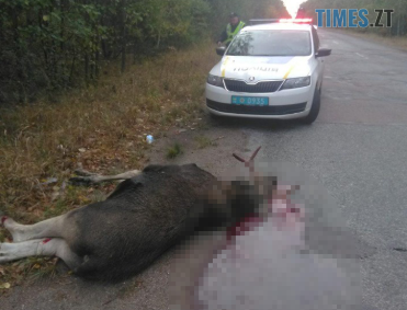 Screenshot 18 - На Житомирщині водій легковика вбив лося та втік з місця пригоди (ФОТО 18+)