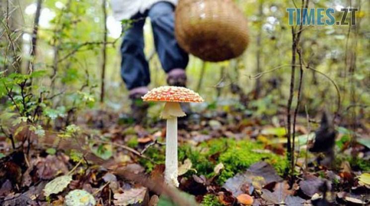 5983c9113f2b645dcc115460fdab61b1 wide big - На Житомирщині двоє людей потрапили до реанімації через отруєння грибами