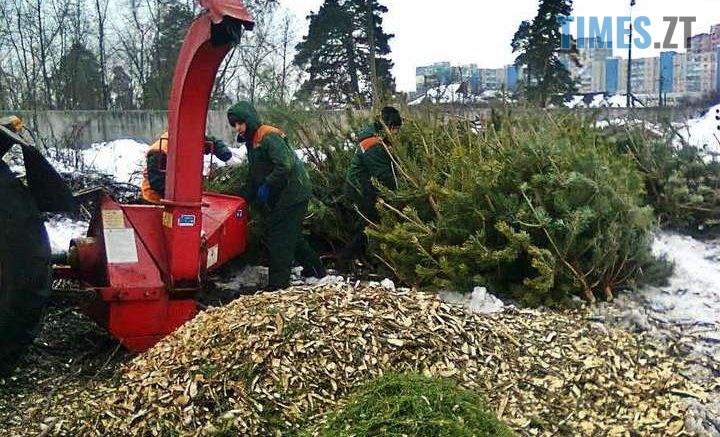 34 main 720x437 - Житомирський «Зеленбуд» закликає приносити  ялинки на утилізацію, а не викидати на смітник