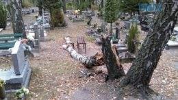 59e15bf77b1c2fec8681f18b9a6a0582 preview w440 h290 260x146 - Впав з дерева на кладовищі: на Житомирщині трагічно загинув працівник комунального підприємства