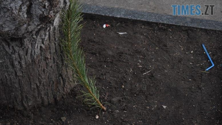 DSC 0113 777x437 - Вандалізм по-житомирськи: на Михайлівській невідомі поламали ялинки, які прикрашали вулицю (ФОТО)