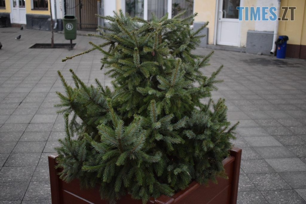 DSC 0125 1024x684 - Вандалізм по-житомирськи: на Михайлівській невідомі поламали ялинки, які прикрашали вулицю (ФОТО)
