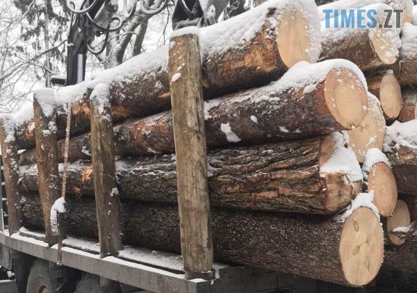 """Screenshot 4 9 - На Житомирщині правоохоронці затримали вантажівки, набиті """"лівою"""" деревиною"""