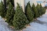 """img1513255141 150x100 - У Житомирі визначилися з """"точками"""", де продаватимуть новорічні ялинки (АДРЕСИ)"""