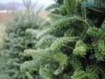 img1575895459 150x113 - З 16 грудня в Житомирі стартує продаж новорічних ялинок (АДРЕСИ)