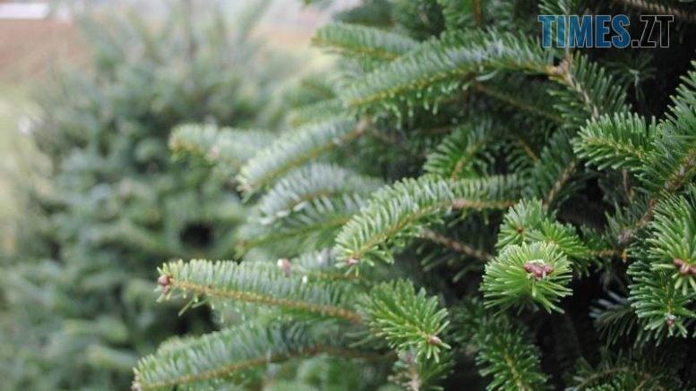 img1575895459 777x437 - З 16 грудня в Житомирі стартує продаж новорічних ялинок (АДРЕСИ)