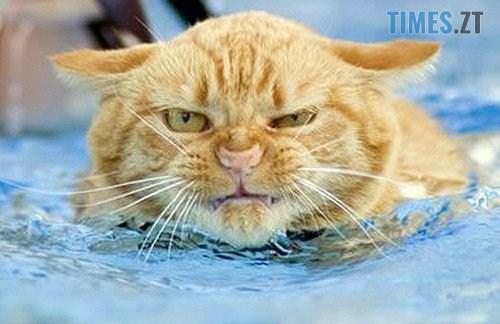 image 560503132333507053468 - Ранок без води: Житомирводоканал повідомляє за якими адресами не буде