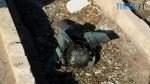 preview 1 150x84 - Український «Боїнг» збили російською ракетою «Тор». А злочинець замітає сліди... (ФОТО, ВІДЕО)