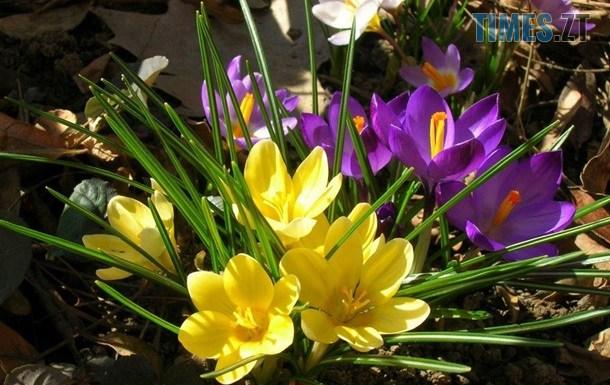 2469384 - Українцям розповіли, скільки вихідних буде в березні