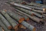"""Screenshot 2 17 150x102 - """"Кронують"""" по-своєму: в Житомирі група чоловіків зрізала кілька десятків дерев (ФОТО)"""