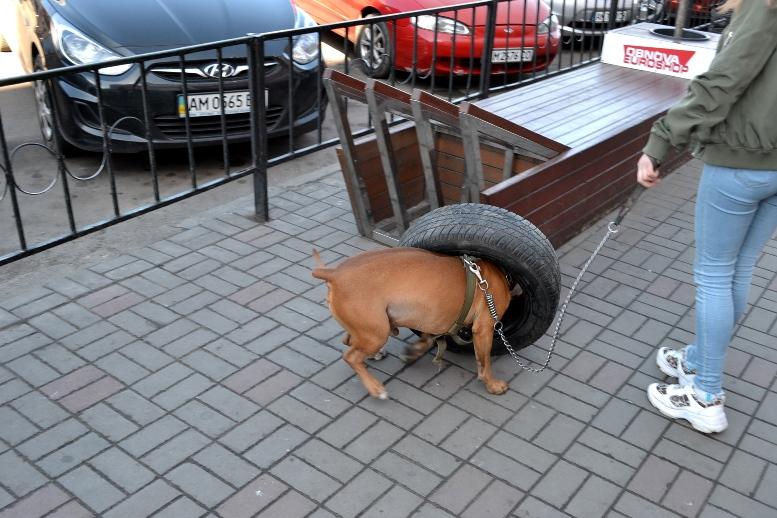 03 1 - Зе-карантин: черги за їжею та грошима – і єдиний в Житомирі «живий» кафетерій (ФОТО)