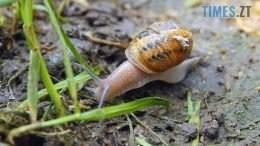 Still1212 00000 260x146 - Скуштувати равликів вже можна на Бердичівщині (ВІДЕО)