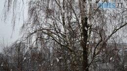 preview 2 1 260x146 - Після «літа» йде «зима»: у Житомирі нічні заморозки та сніг