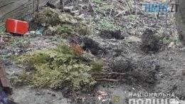 tuy  260x146 - На Чуднівщині вандал викорчував з алеї пам`яті близько 20 саджанців туї (ФОТО)