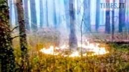 01 20 260x146 - Аваков показав диверсійні підпали у Чорнобильській зоні. Нацгвардія ловить диверсантів (ВІДЕО)